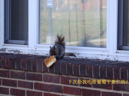 squirrel_eating-bread